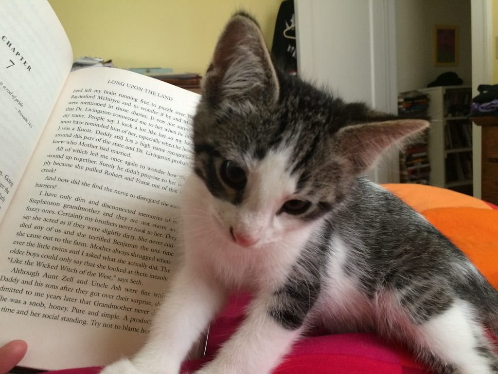 The cats help me read, too….
