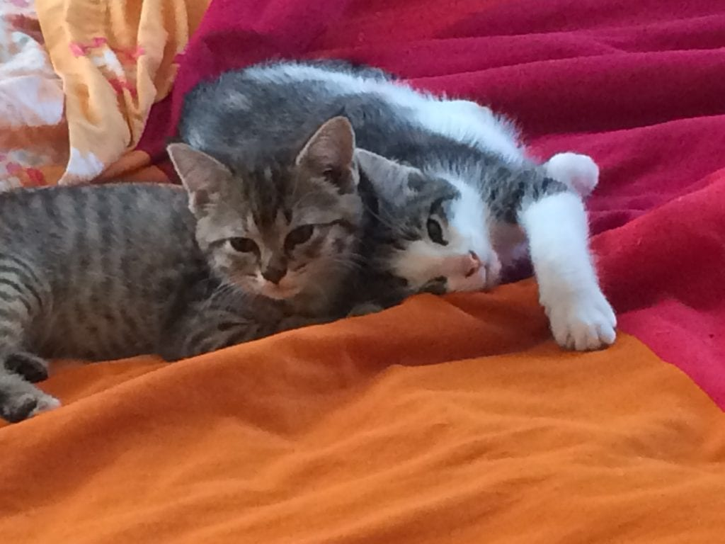 Our current cat residents include Beatrix (L) and Mr. Tibbs (R). They are purrrrfect.