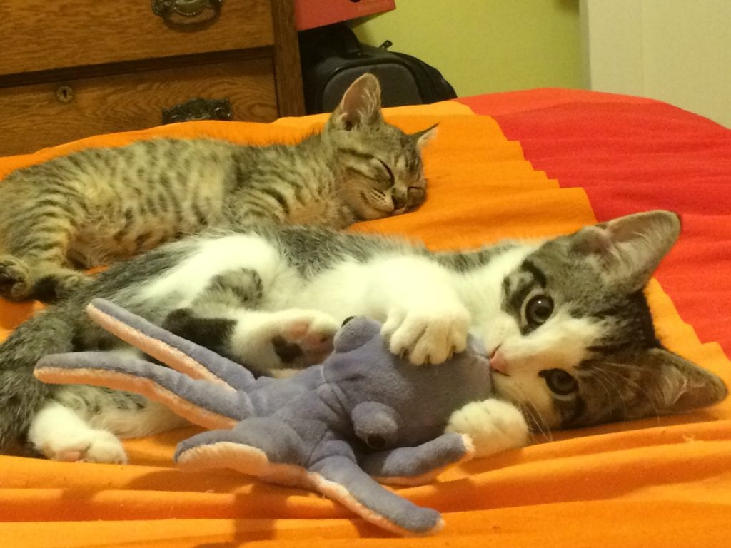 The kittens love sea monsters almost as much as I do!
